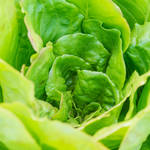 3月に旬を迎える春野菜は?心ときめく甘くて美味しい自然の恵み