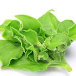 観葉植物みたいな食べられる葉野菜!アイスプラントのプチプチ食感の虜に