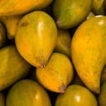 沖縄フルーツ「カニステル」が気になる!次世代のアボカド?不思議な果実をご紹介!