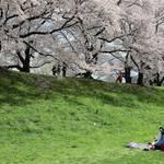 お花見弁当、中身はどうする?とっておきの大人メニューで春満開!