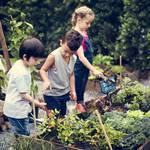 野菜嫌いが解消するかも?子どもの食育にも良い「育てて、食べる」のススメ!