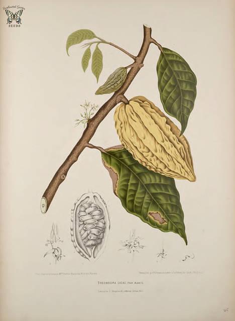 Swallowtail Garden Seeds (1257)