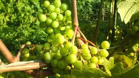 レバノンワインは近年の高い評判をとっています