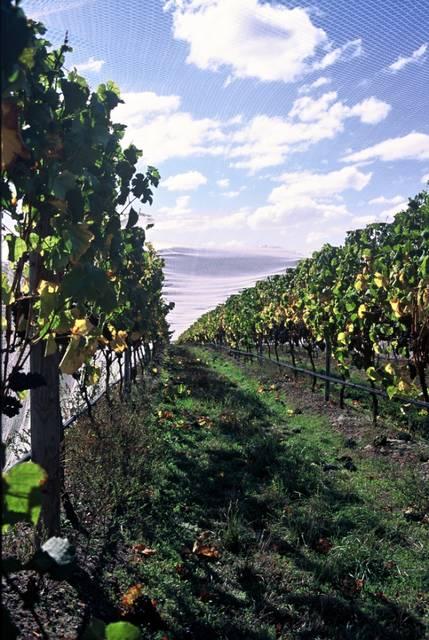 Stefano Lubiana Wines Tasmania Granton Vineyard by stefano lubiana wines (8373)