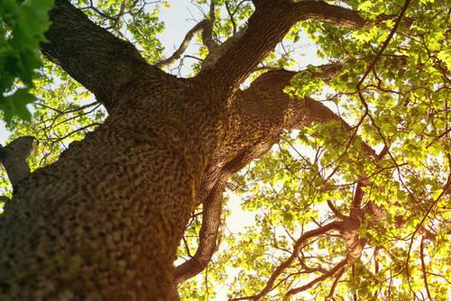 GooDween123/Shutterstock.com (16998)