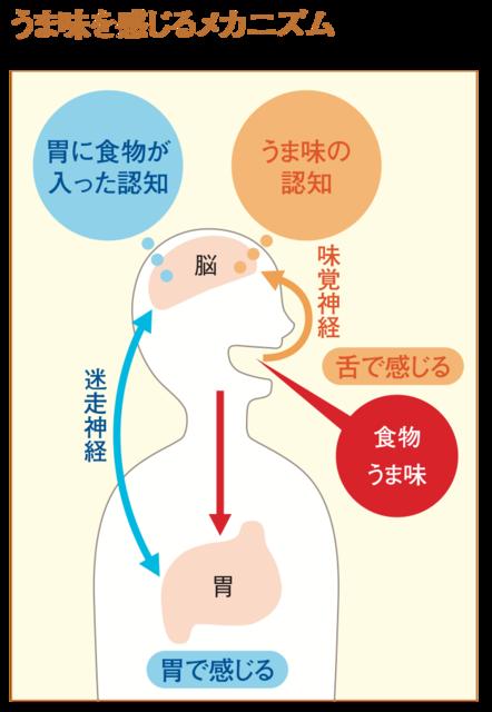 「うま味」は舌だけでなく、胃でも感じることが2008年...