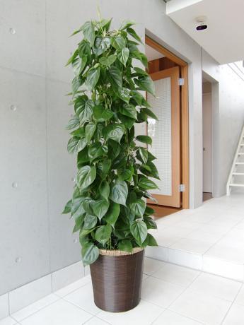 場所別!オフィスに置きやすい「観葉植物・グリーン」まとめ♥︎