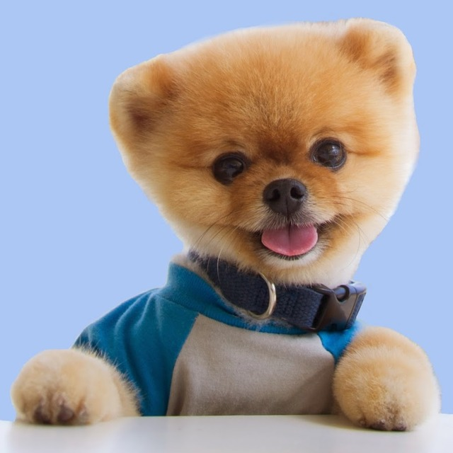 ストレス社会の現代日本に オフィス犬を、今こそ!