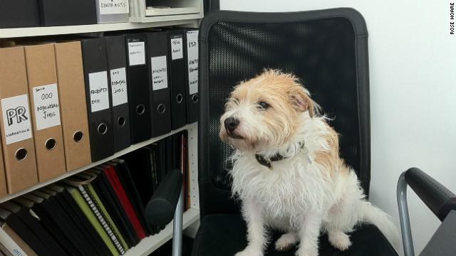 CNN.co.jp : 「オフィス犬」で仕事のストレス軽減? 癒しの存在で士気向上 - (1/3) (4075)