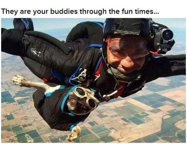 【海外の反応】 犬が人間の最良の友である理由 : なんでも (4092)