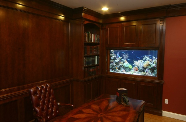 Cool Fish Tanks for Your Office (7158)