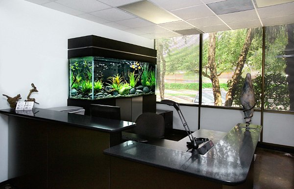Cool Fish Tanks for Your Office (7161)