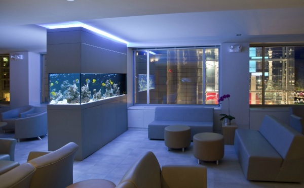 Cool Fish Tanks for Your Office (7168)