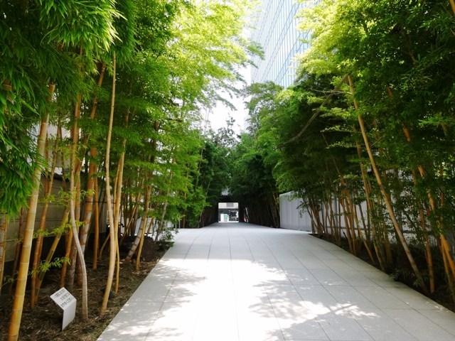 南青山ブライトスクエア 隣地の竹やぶも美しい