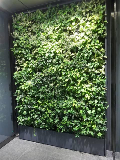 オフィス入口の壁面緑化