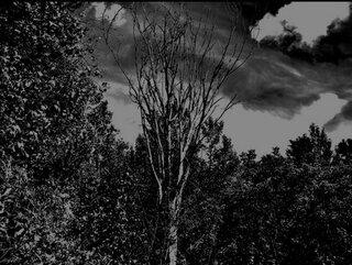 USのデプレッシブ・ブラック・メタル・プロジェクトMisanthropistがニュー・アルバムをリリース