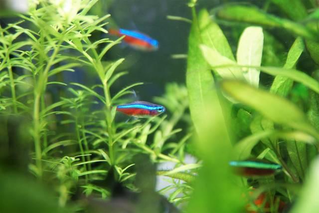 一人暮らしで熱帯魚を育てるなら!知っておきたい基礎知識