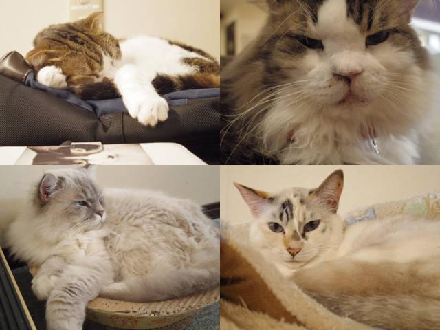 【猫カフェ店長に聞く】猫と一緒に暮らしたい!  第1回:猫を家族に迎える方法