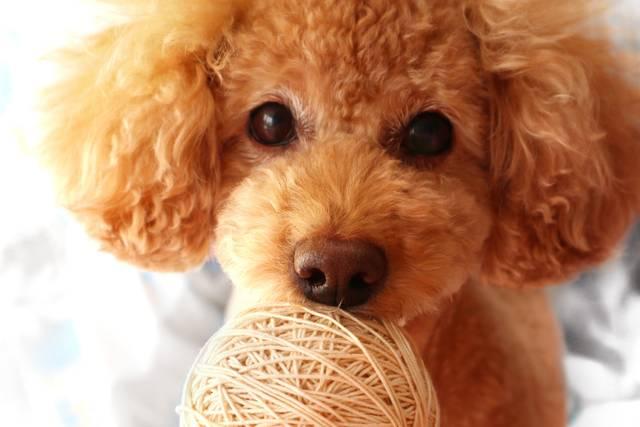 愛犬を病気から守るために!飼い主が気をつけたいこと