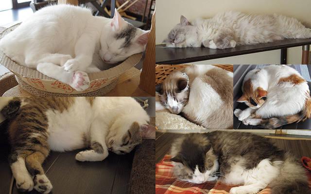 【猫カフェ店長に聞く】猫と一緒に暮らしたい! 第2回:猫と暮らすためのお部屋探し