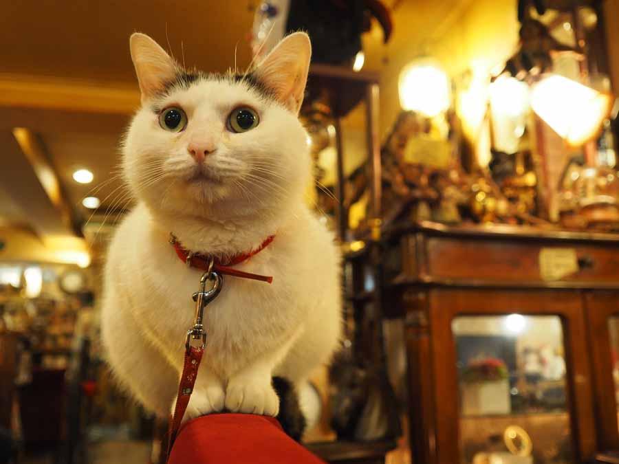 【soloDinner】看板猫の癒やし付き♡ 昭和レトロなオムライス