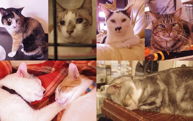 【猫カフェ店長に聞く】猫と一緒に暮らしたい!  第3回:留守がちな一人暮らしでの猫との暮らし