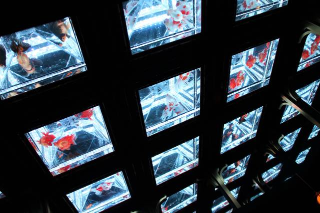 アートアクアリウム 金魚 天井