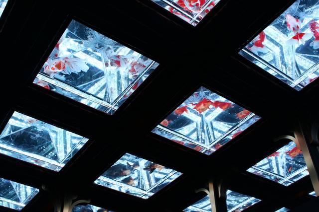 浴衣 デート 日本橋 アートアクアリウム 金魚 天井