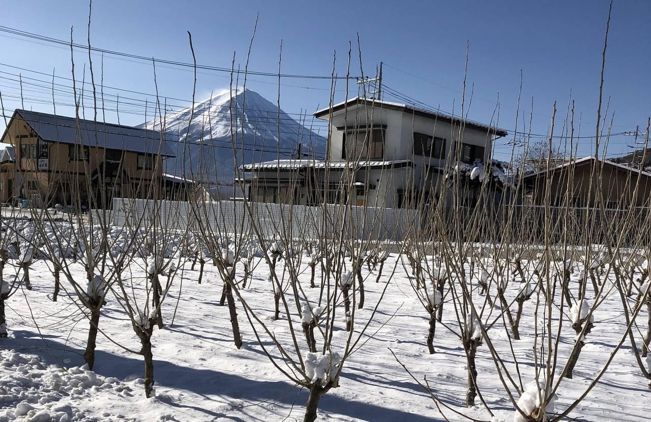 おおいしつむぎ通信2月号 大石の養蚕について 桑畑から見る富士山!!ここにしかない景色!!
