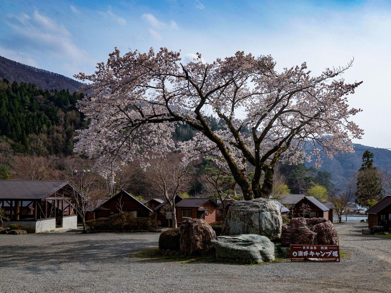 富士五湖、西湖のキャンプ場!樹海が魅せる自然を冬でも満喫。初心者でも安心な湖畔キャンプ場!