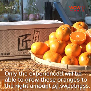 What Is The Japanese Mikan And Why Is It Different From Oranges?
