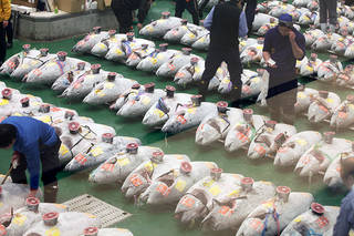 What Does A Tuna Auction At Toyosu Market Look Like From The Observation Deck?