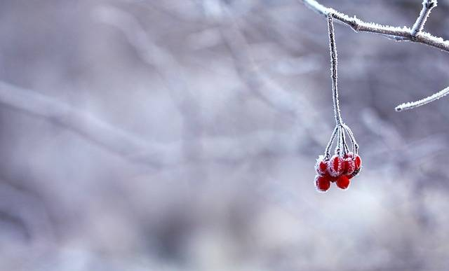Frozen Berries Red · Free photo on Pixabay (1670)