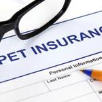 ペット保険とは?必要性や補償範囲を紹介