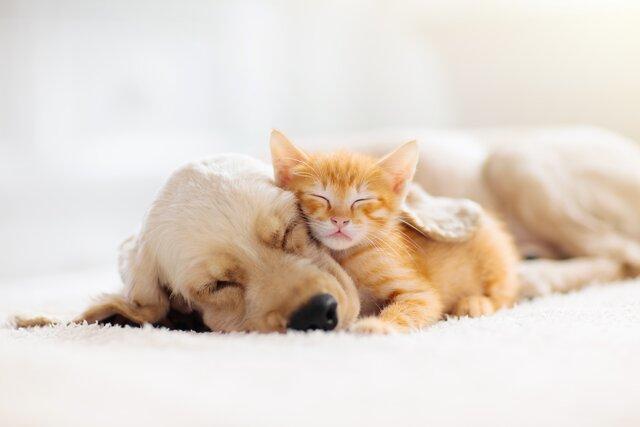犬や猫の誤飲対処法~吐かせてはいけない事例~