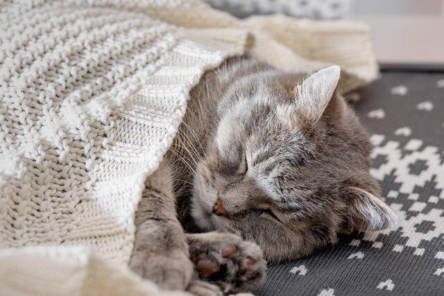 猫風邪はいつ、どうやってかかる?