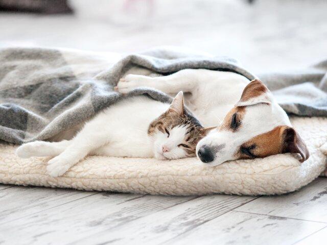 犬や猫のがん 早期発見・予防できる習慣とは