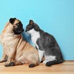 犬や猫の血液検査はいつするべき?目的とタイミング