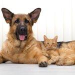 室内飼いの犬や猫にもワクチンは必要?