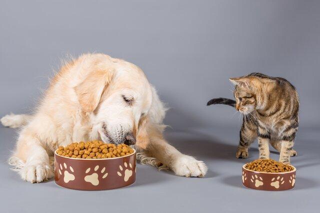 犬や猫がごはんを食べない理由と受診の目安