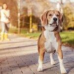 犬の近所迷惑対策にペット保険を活用しよう