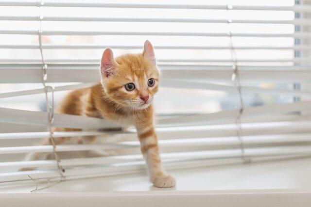 近所迷惑だけじゃない猫の外飼いに潜む危険とは