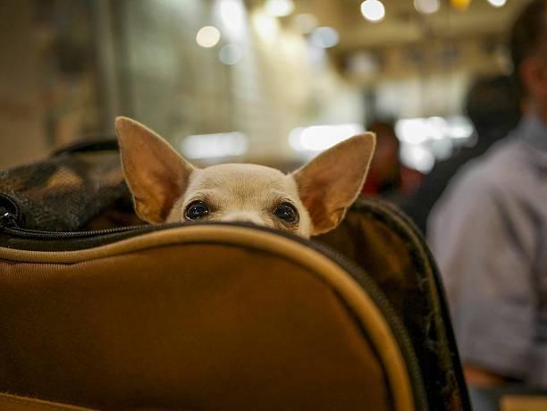 空港内での過ごし方:犬を同伴する場合、どうしますか。