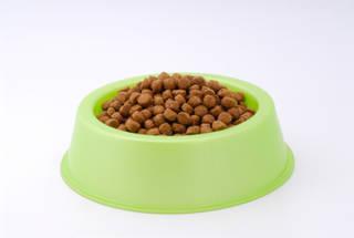 【猫の健康】理想的な食事量とグラム換算の仕方について