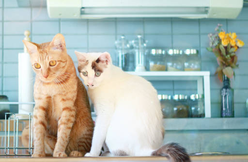 【食事を残す】放置しても大丈夫?気にすべき猫の食生活