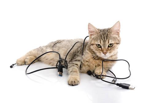 【感電防止のしつけ】猫がコードを噛む時の対処法