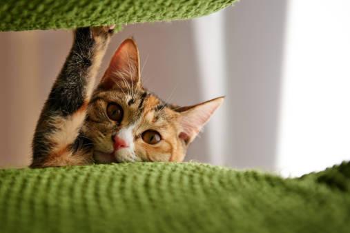 猫の苦手臭どれ使う?手作りしつけスプレーの作り方