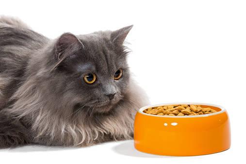 食事を拒否!?猫がご飯を食べない原因と、その対処法