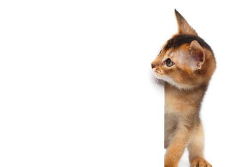 嫌いな音がしつけに効果的ってホント?猫と音の関係♪