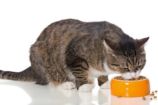 愛猫に与える食事の回数は、1日に何回が適切でしょうか?